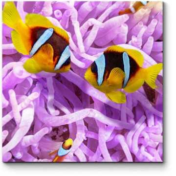 Невероятный мир тропических рыб