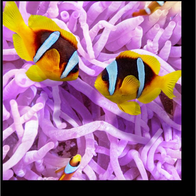 Модульная картина Невероятный мир тропических рыб