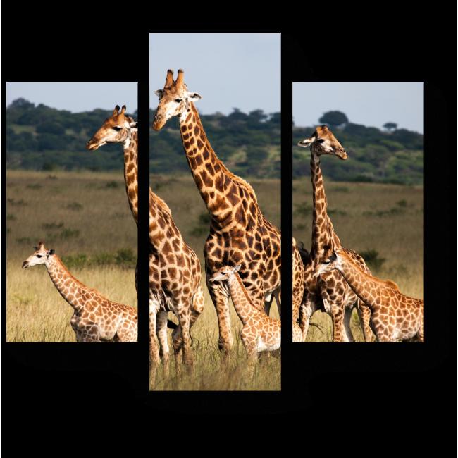 Модульная картина Большая семья жирафов