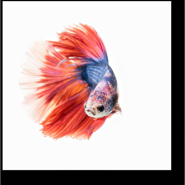 Модульная картина Красно-синяя рыбка