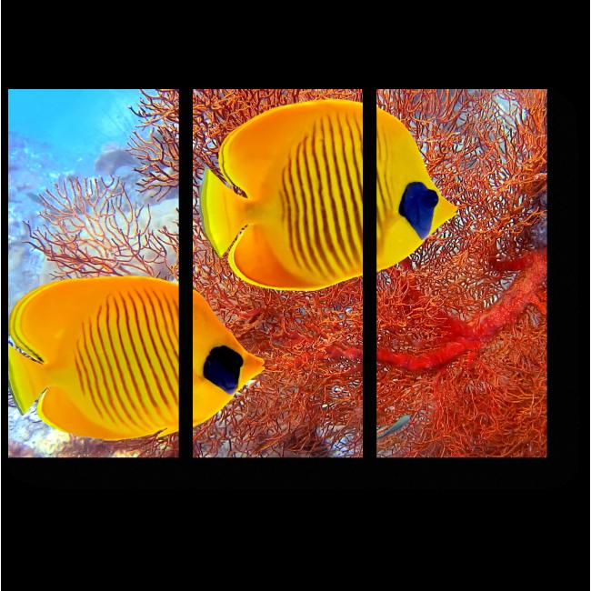 Модульная картина Солнечные обитатели океана
