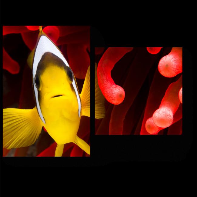 Модульная картина Рыбка в кораллах