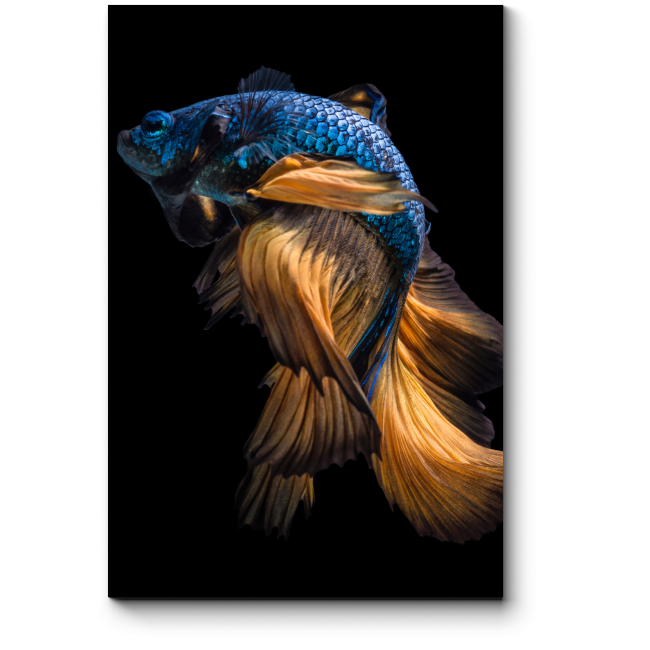 Модульная картина Завораживающий танец рыбы