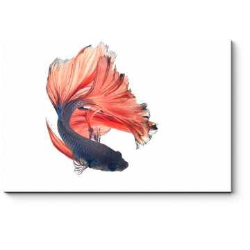 Роскошная рыба