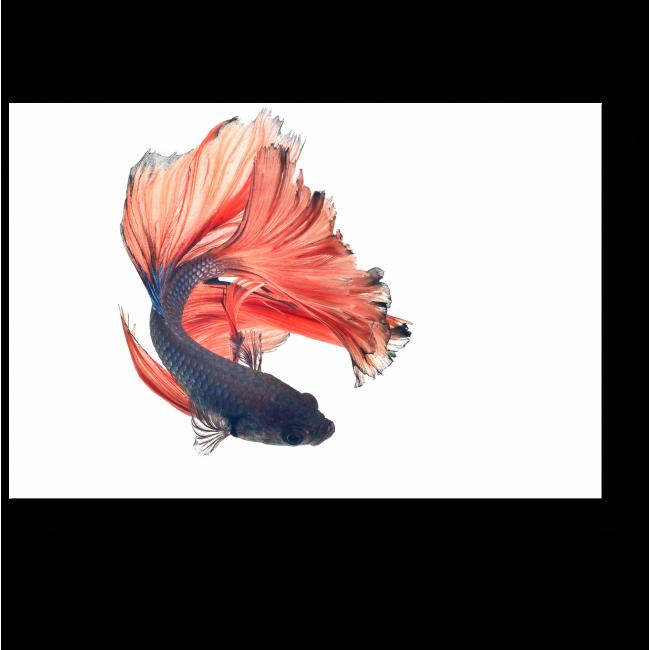 Модульная картина Роскошная рыба