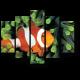 Очаровательная рыба-клоун