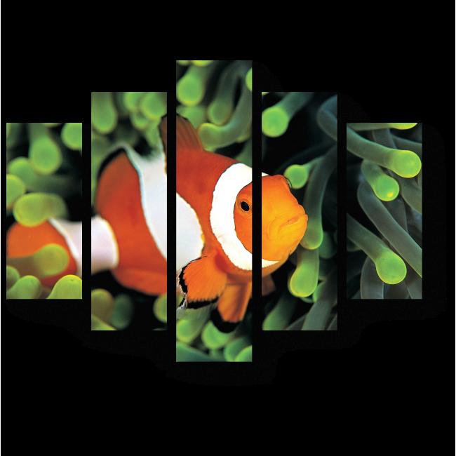 Модульная картина Очаровательная рыба-клоун