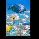 Разноцветные жители океана