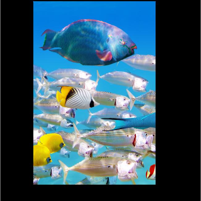 Модульная картина Разноцветные жители океана