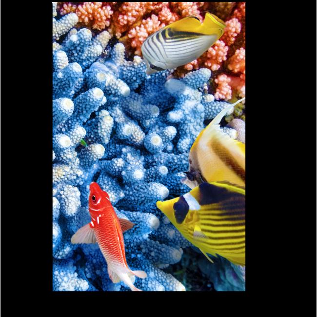 Модульная картина Завораживающий морской мир