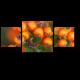 Спелые ягоды рябины