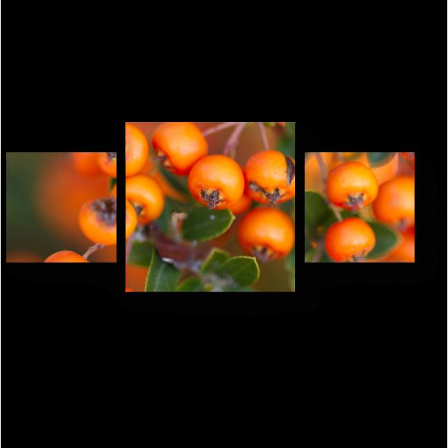 Модульная картина Спелые ягоды рябины
