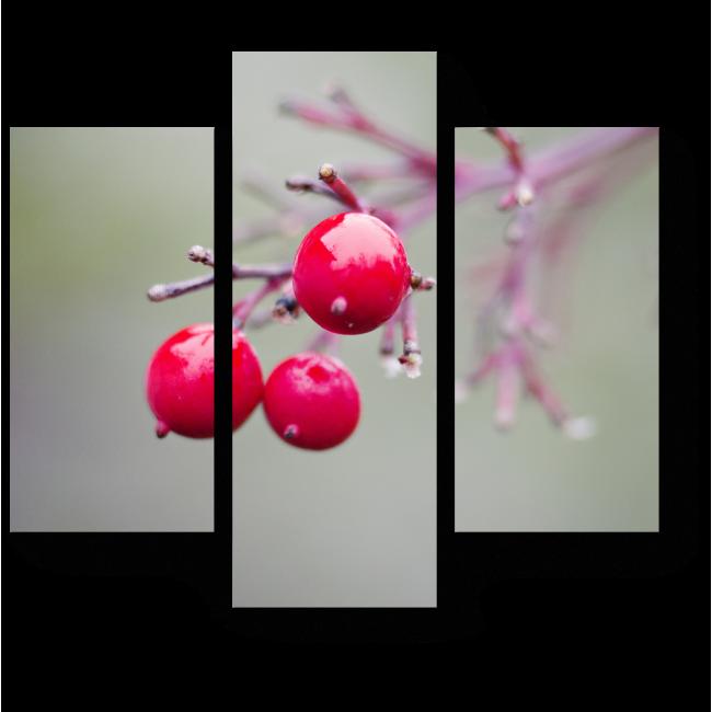 Модульная картина Зимние ягоды