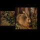 Заяц в лесу, Ханс Хоффман