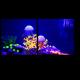 Яркий мир кораллов и медуз