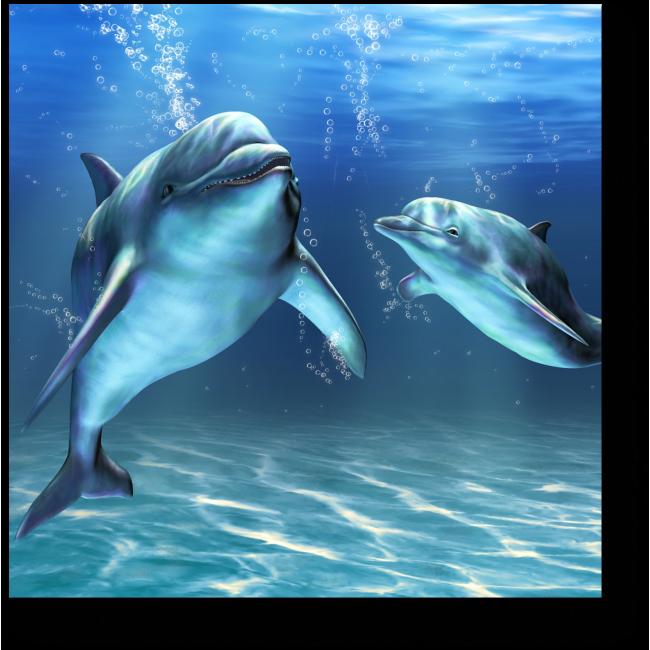 Модульная картина Счастливые дельфины