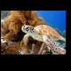Черепаха, плывущая в коралловом рифе