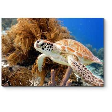 Модульная картина Черепаха, плывущая в коралловом рифе