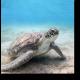 Чарующая подводная черепаха