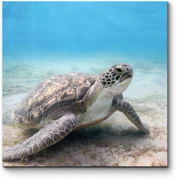 Модульная картина Чарующая подводная черепаха