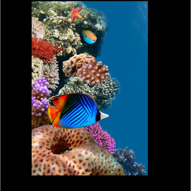 Модульная картина Солнечные рыбки
