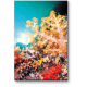 Яркий коралловый мир