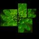 Зеленый житель подводного мира