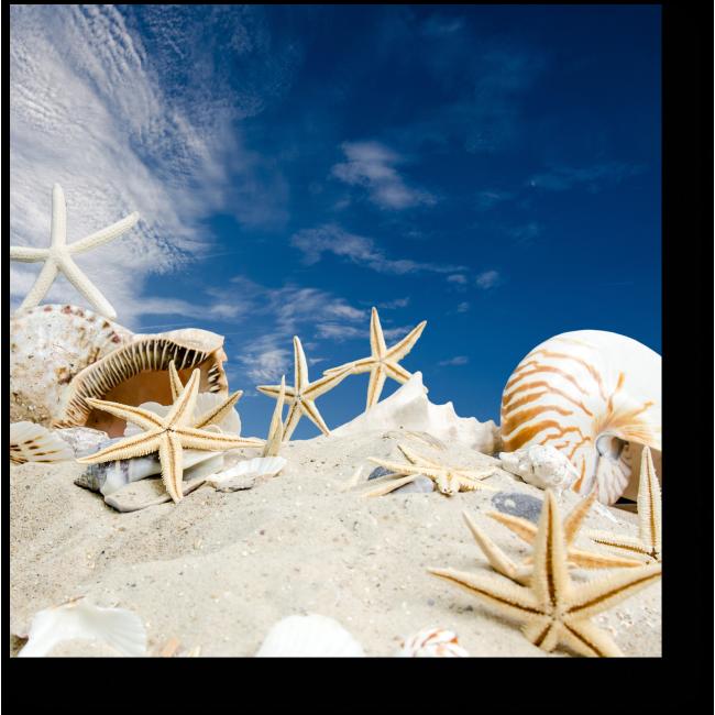 Модульная картина Дары моря