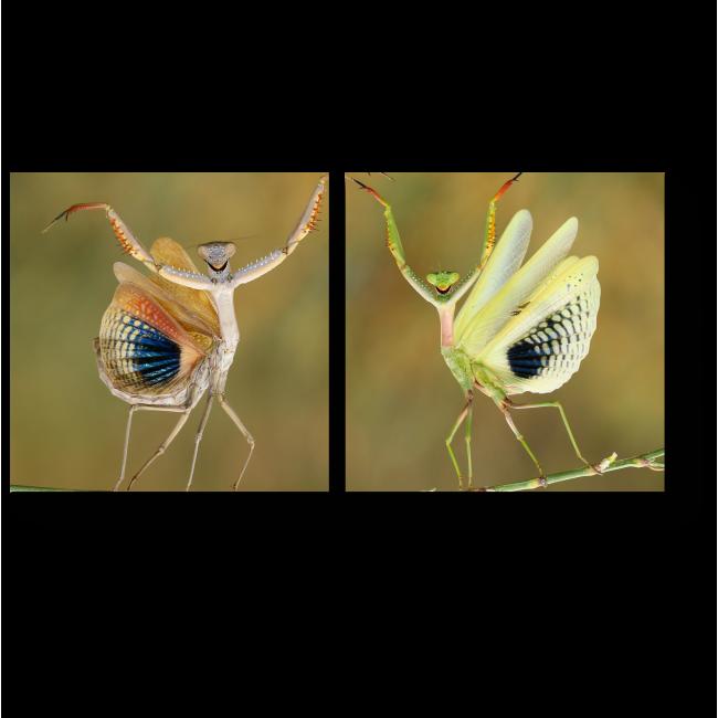 Модульная картина Танец природы