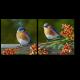 Птички - невелички