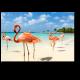 Очаровательные фламинго