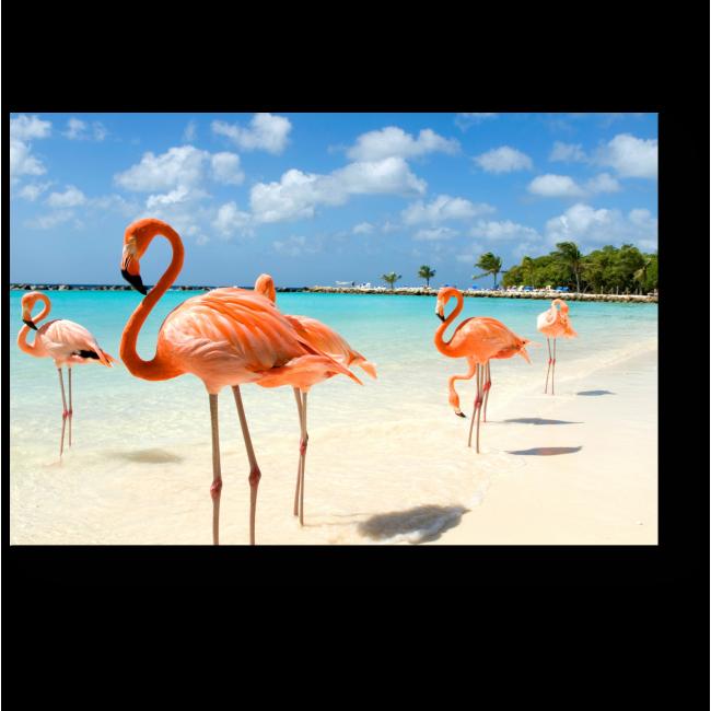Модульная картина Очаровательные фламинго