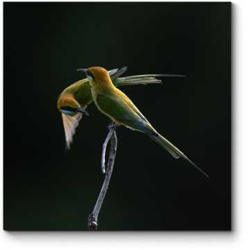 Модульная картина Потрясающие птицы