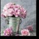 Прекрасные розовые гвоздики