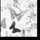 А бабочкам снятся цветы...