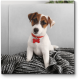 Харизматичный пес