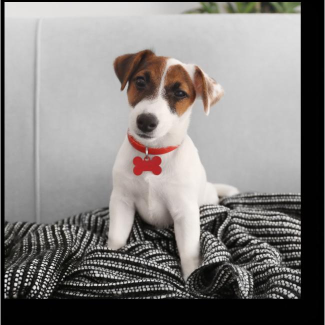 Модульная картина Харизматичный пес
