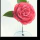 Прелестный цветок