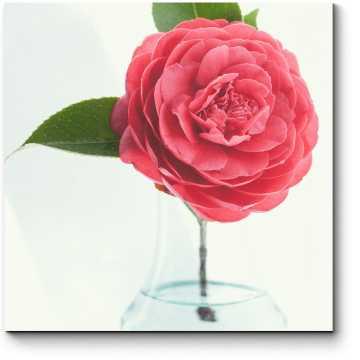 Модульная картина Прелестный цветок