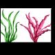 Яркие представители морской фауны