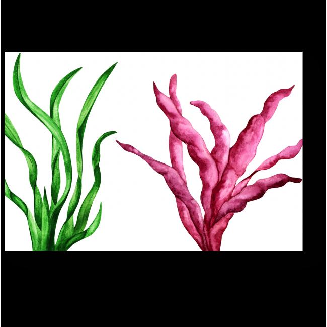 Модульная картина Яркие представители морской фауны