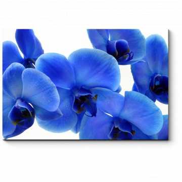 Чарующие орхидеи