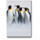 Королевские пингвины гуляют