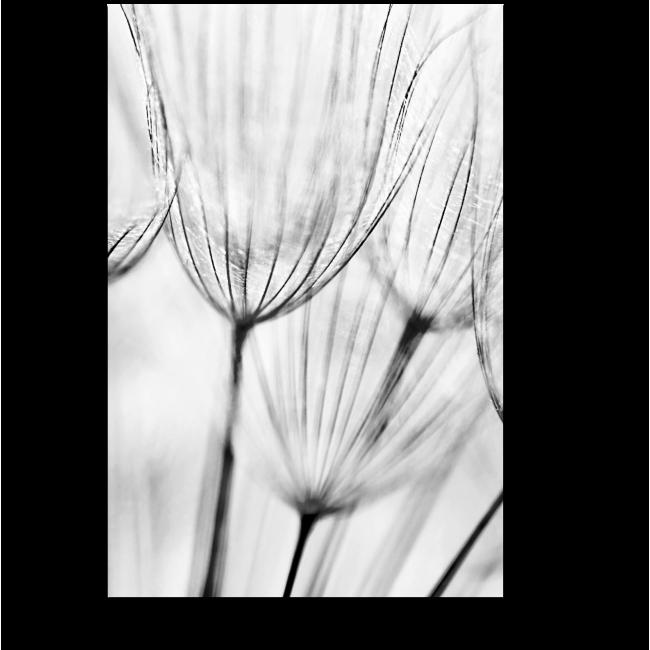 Модульная картина Легче ветра