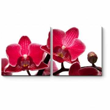 Модульная картина Магия орхидей