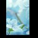 Голубая нежность