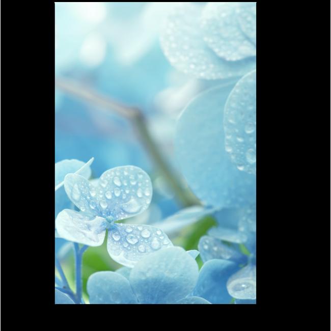 Модульная картина Голубая нежность