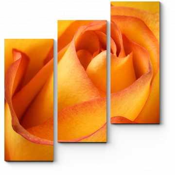 Хрупкий бутон розы
