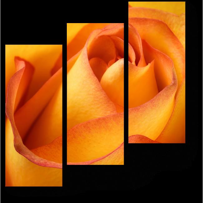 Модульная картина Хрупкий бутон розы