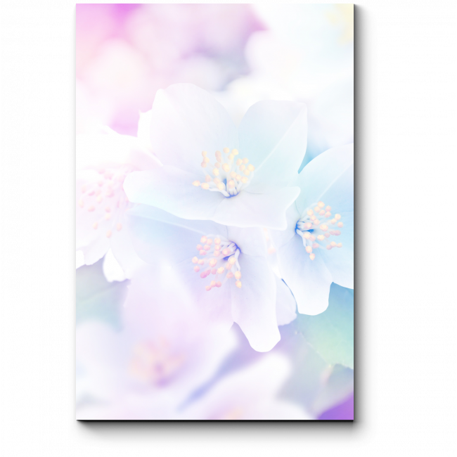 Модульная картина Нежный жасмин